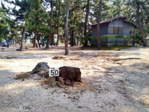 一般キャンプサイト-50